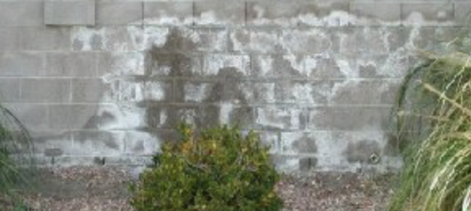 🤷♂️ What is Efflorescence? 🤷♂️